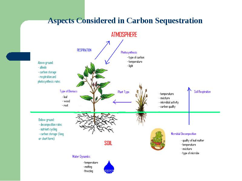 hypothesis for photosynthesis Essays - largest database of quality sample essays and research papers on hypothesis for photosynthesis.