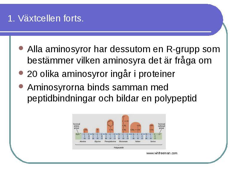 alla aminosyror